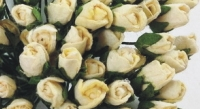 MINI ROSE BUDS - CREAM