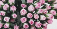 MINI ROSE BUDS - PINK