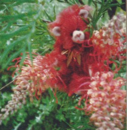 BOTTLE BRUSH BEAR - 5""